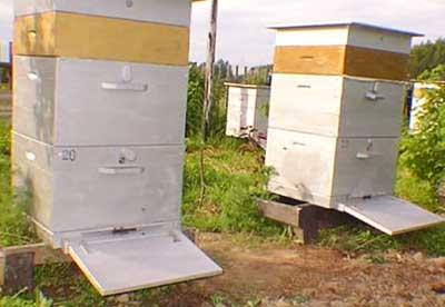Улей для пчел, Пчелиный улей