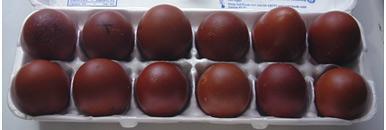 яйца Курицы породы Маран, яйца Кур породы Marans