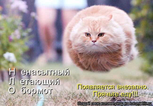 http://vancats.ru/images_dr/foto/518545.jpg