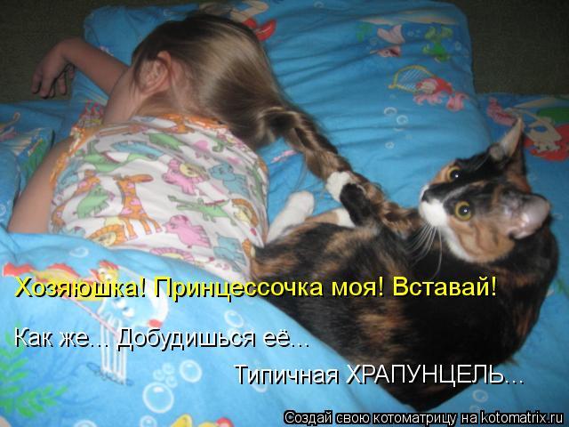 Породы собак и кошек Описание и характеристика пород