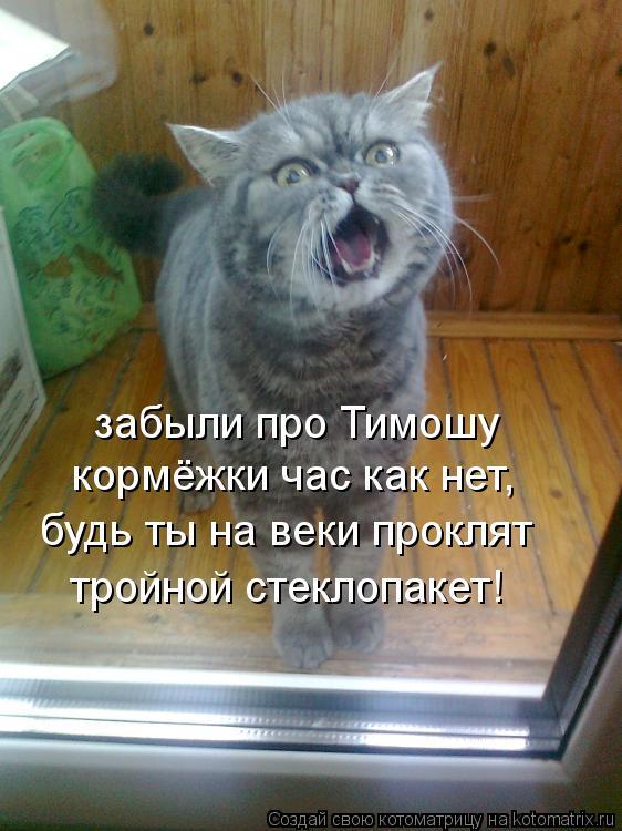 http://vancats.ru/images_dr/foto/kotomatritsa_1W.jpg